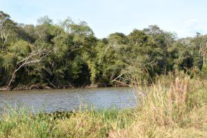 Mes del ambiente: webinar sobre restauración de ecosistemas como herramienta para la conservación