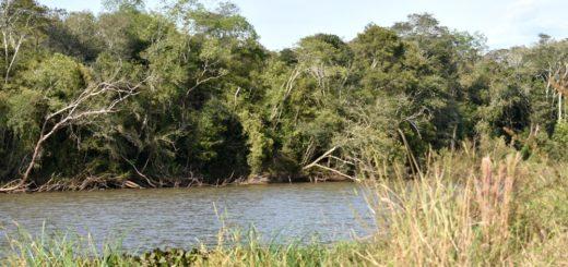 Candelaria: este martes realizarán una muestra ambiental de sensibilización en torno a la reserva natural Urutaú