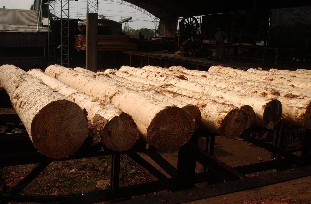 """Daniel Durán:""""El problema de la actividad primaria es la sobreoferta de madera en el mercado y la presión impositiva"""""""