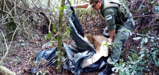 Gendarmería secuestró más de 200 kilos de marihuana en Santo Pipó