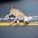 Realizan una campaña de concientización para evitar que sigan matando animales en las rutas