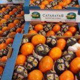 El Ministerio del Agro brindó capacitación y entregó plantines a productores hortícolas