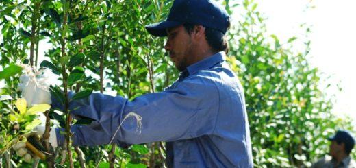 Aporte del INYM facilitará créditos por unos450 millones de pesos para financiar la cosecha