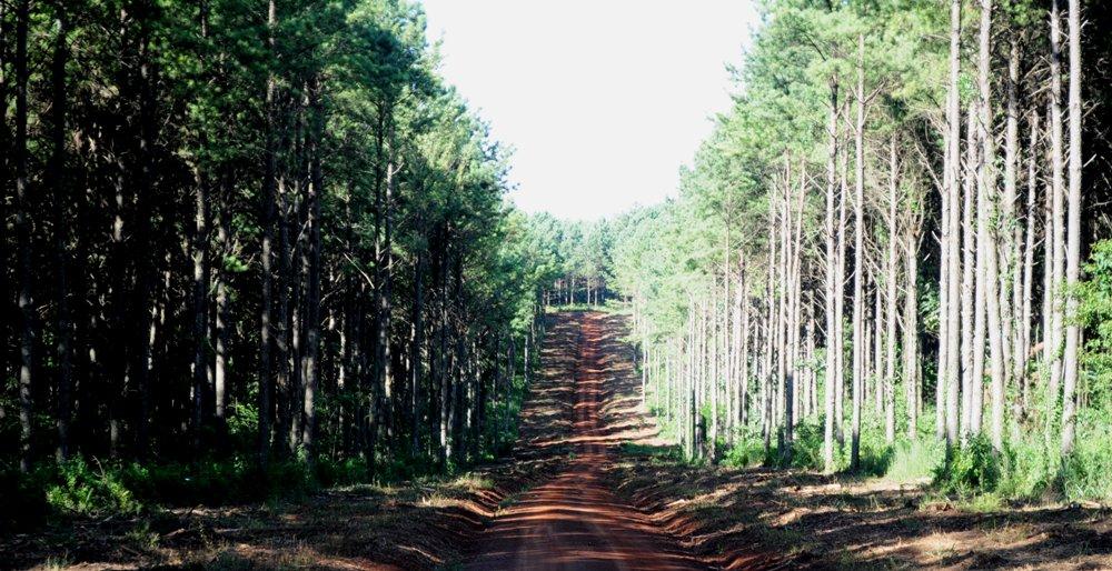Sobreoferta de madera en el Norte de Misiones perjudica a más de 600 silvicultores de la Cooperativa Agrícola Mixta de Monte Carlo