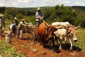 La OIT advierte una tendencia de crecimiento en la precarización laboral en países de América Latina
