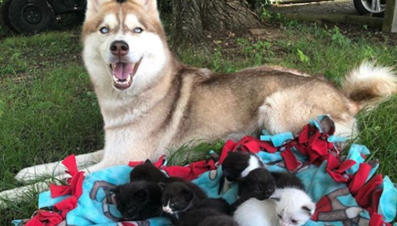 Historia viral: una perra salvó a gatitos recién nacidos de morir de hipotermia