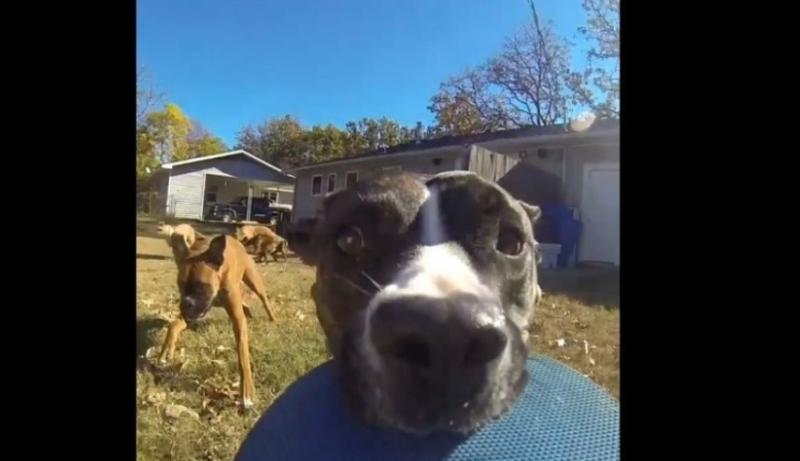 Video viral: un perro roba una cámara GoPro y se graba mientras huye