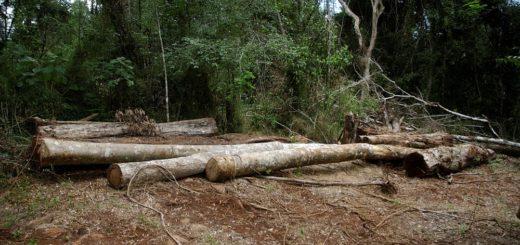 América Latina es una de las tres regiones del mundo donde sigue la deforestación, según la FAO