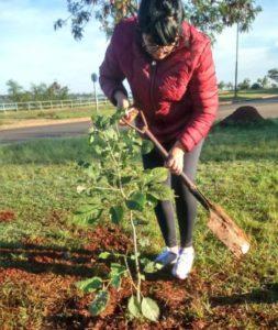 El municipio de Posadas ya plantó más de 5000 árboles durante este año