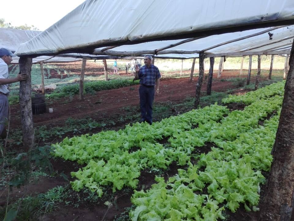 Agricultores de Loreto se unen para ampliar su producción hortícola
