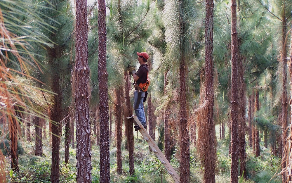 """""""No hay problemas de desabastecimiento de rollos de madera en Misiones, lo que ocurre es que se paga al productor precios ridículos por la materia prima"""", aseguró el presidente del Instituto Forestal"""