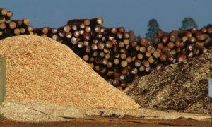 """Sobreoferta de madera: """"En la actual situación de crisis de los proveedores forestales, una regulación temporal del mercado puede resolver la situación"""""""