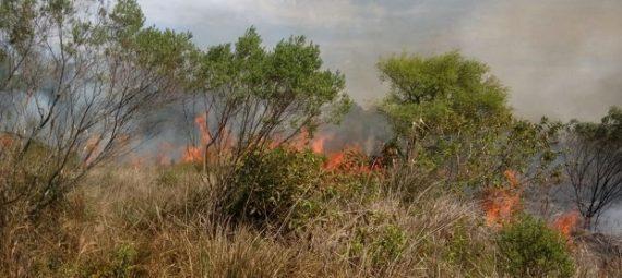 Desde Alerta Temprana advierten que el riesgo de incendio es alto a raíz de las altas temperaturas