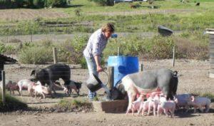 """Advierten que los pequeños productores porcinos se encuentran en """"situación terminal"""""""