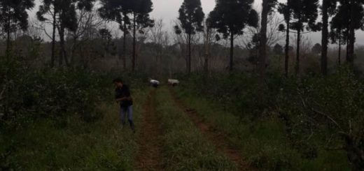 Trabajador rural murió tras tocar un cable de media tensión en Paraje Soberanía