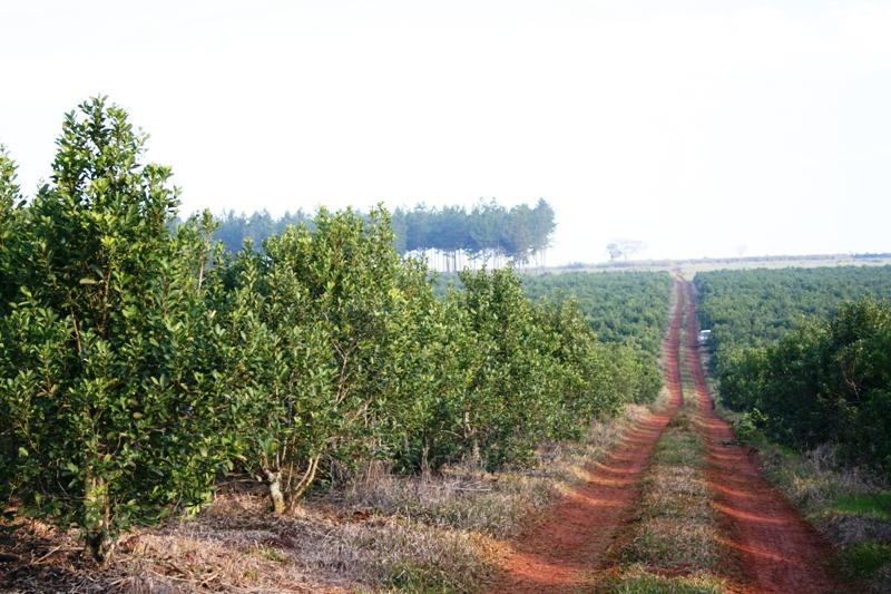 El INYM realiza un minucioso relevamiento de plantaciones con su Sistema de Información Geográfica