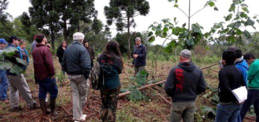 Productores de Campo Ramón y de Ameghino se capacitaron en plantación de Kiri consorciado con cultivo de yerba mate