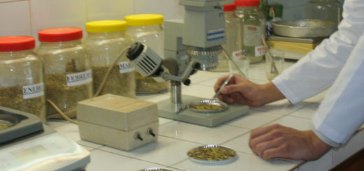 INYM y CONICET otorgan 10 becas para investigar sobre yerba mate