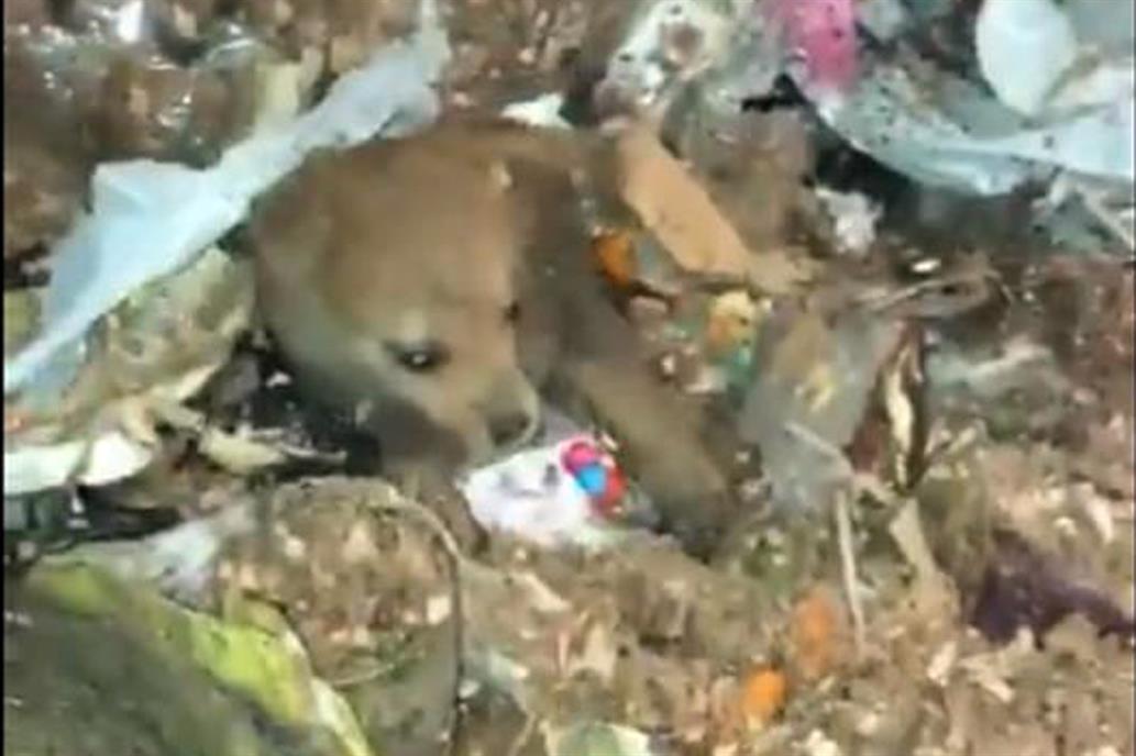 Le salvaron la vida a una cachorrita que estaba adentro de un camión de basura