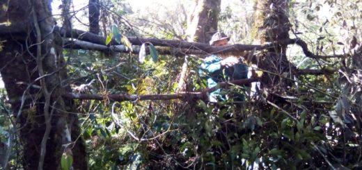 Guardaparques destruyeron saleros y cebados de furtivos dentro del Parque Salto Encantado