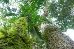 La campaña 7 Maravillas Naturales Argentinas cerró con 77 lugares preseleccionados: Selva Misionera, Saltos del Moconá, Minas de Wanda y Saltos y Cascadas de Misiones siguen en carrera