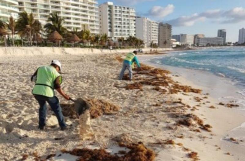 Desastre ecológico: preocupación en México por el arribo de alga sargazo a sus costas