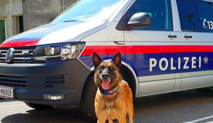Les ponen botas a los perros policías por la ola de calor que afecta a Europa