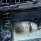 Un caballo desnutrido se desplomó y lo golpearon: los vecinos lo salvaron