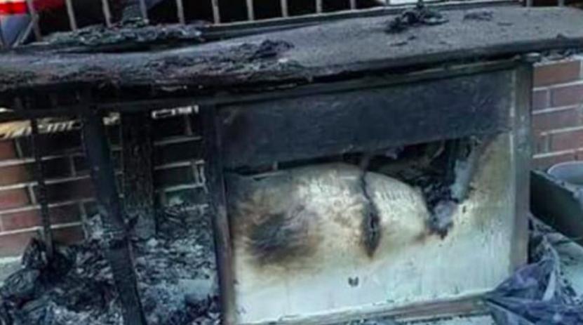 Denunciaron maltrato animal en Chile: un hombre incendió el lugar en el que dormían dos perros