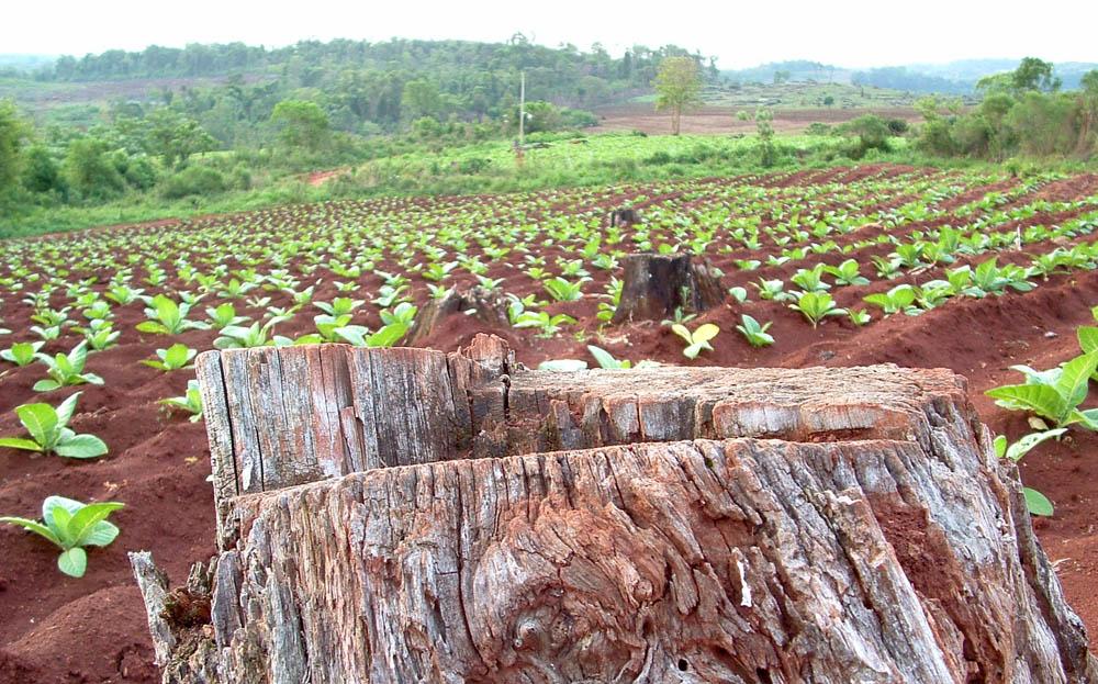 Argentina promueve políticas de conservación, restauración y manejo sostenible de los suelos agropecuarios