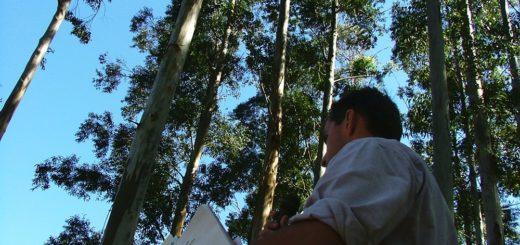 16 de agosto, Día del Ingeniero Forestal Argentino