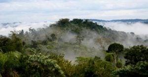 """""""El Moconá que no se ve"""", la mirada del guardaparque y fotógrafo naturalista Fabián Franco desde lo profundo de la selva misionera"""
