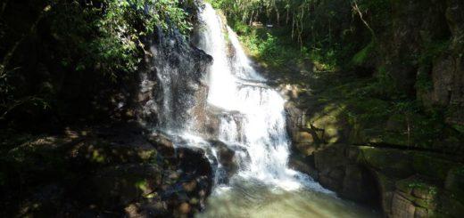 Bióloga de la Fundación Temaikén destacó que la selección de la Selva Misionera como Maravilla Natural Argentina, es una nueva oportunidad para atraer recursos para la conservación