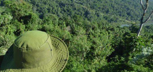 Buscan declarar de interés provincial campaña de elección por la Selva Misionera como una de las maravillas naturales de la Argentina