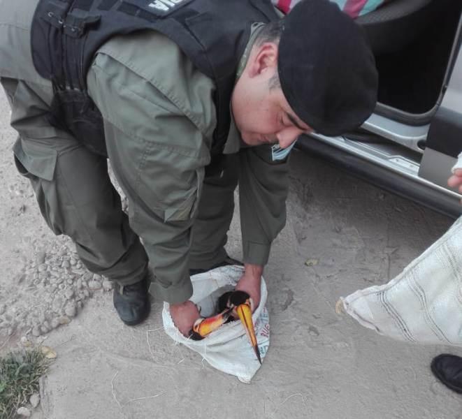 Salta: rescataron cuatro tucanes que eran trasladados en bolsas de arpillera