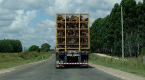 En Uruguay, la celulosa lleva a la forestación hacia el liderazgo en las exportaciones del país