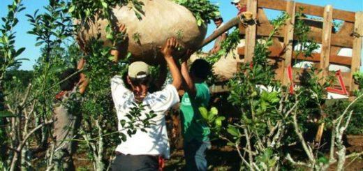 Tareferos reclaman por política nacional que los deja fuera del subsidio interzafra