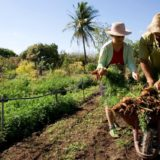 Aseguran que en Misiones unos 12 mil agricultores se quedarían sin monotributo social costo cero
