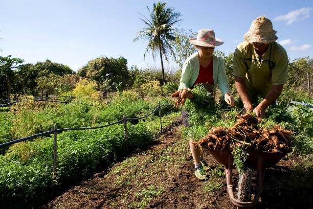 Último día para actualizar datos del Monotributo Social Agropecuario