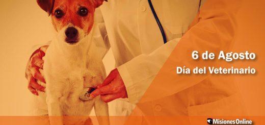 Día del veterinario: Cuatro políticas públicas para mejorar la calidad de vida de los animales y su relación con el ser humano