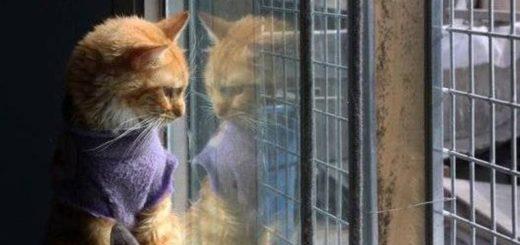 En Perú se encuentra el único hogar en Latinoamérica que refugia a gatos con leucemia