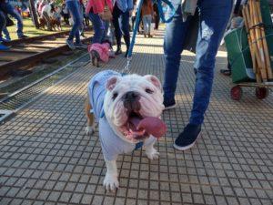 Más 150 animales participaron del Desfile de Mascotas en la Costanera de Posadas