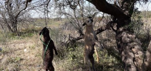 Brutal matanza de perros en Entre Ríos: aparecieron colgados y golpeados
