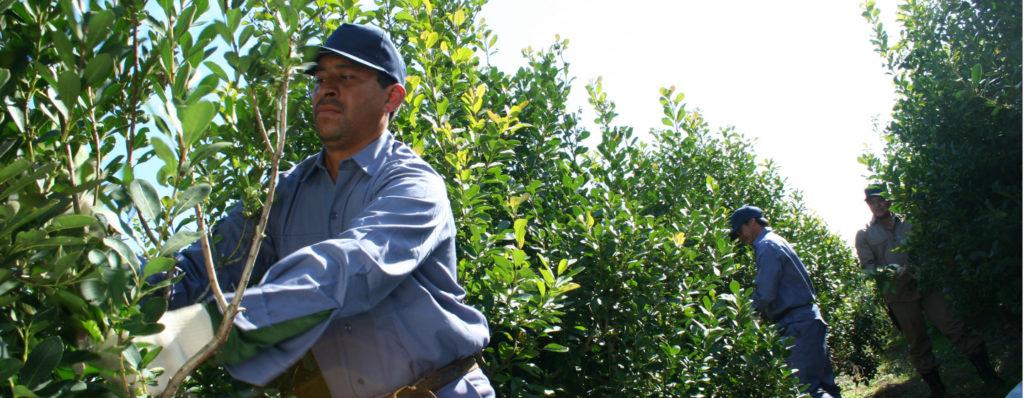 El INYM lleva el Registro de Yerbales y Productores a otras cuatro localidades