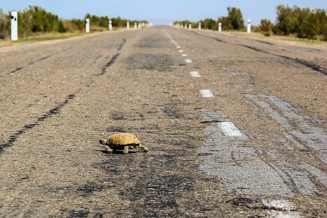 Alternativas para reducir atropellos de animales en rutas que atraviesan áreas protegidas