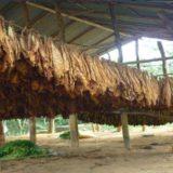 Capacitaron a docentes de zonas tabacaleras de Misiones en manejo de suelo y protección del ambiente