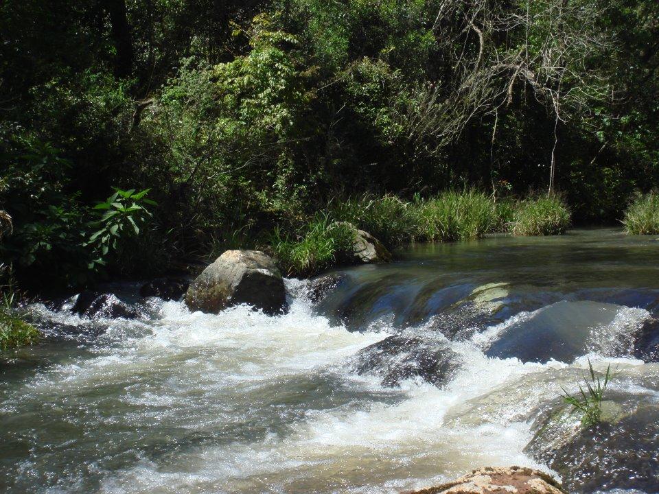 Es jubilado y decidió destinar sus últimos ahorros a conservar 100 hectáreas de selva misionera en San Pedro
