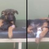 Arrojaron a un perro dentro de una bolsa atada con alambre en las afueras de San Vicente: lo salvó la Policía y ahora buscan al dueño