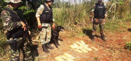 """""""Operación Mandioca"""": incautaron un cargamento de marihuana oculto en una plantación de arbustos tropicales en Eldorado"""