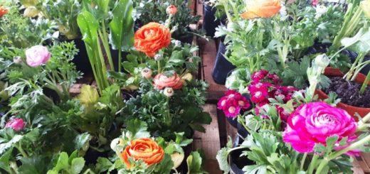 El Mercado Concentrador de Posadas tiene variedades de plantas y flores